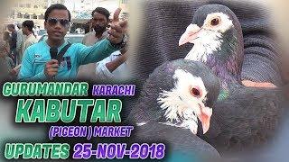 guru mandir gola kabootar market - Video hài mới full hd hay nhất