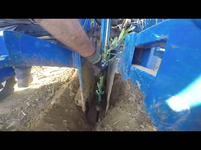 Plantación con sistema Trimble TrueTracker