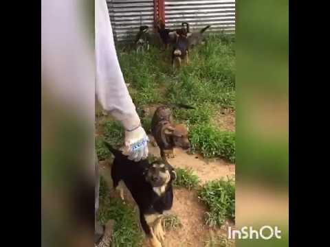 РЭЙ: фонд помощи бездомным животным: Международный день собак