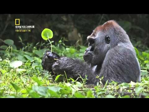 Video of 내셔널지오그래픽(아름다운 날들의 기록) 사진전-부산