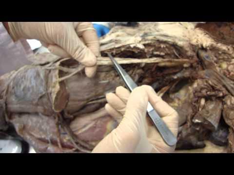Schmerzen Gelenke der Knie und Hüfte als heilen