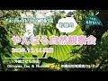 沖縄自然あしびー【昼のやんばる自然観察会】