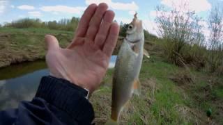 Как ловить ельца в марте и на что малых реках