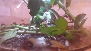 Ist Das Eine Lasius Niger Konigin Natur Insekten Ameisen