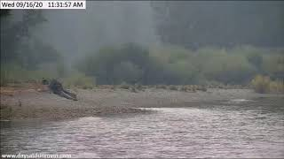 Dunrovin Ranch Osprey Video_2020-09-16_120158-Swoop Chased By a Eagle