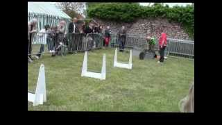 preview picture of video 'Flyball - Journée du chien du Moulin'