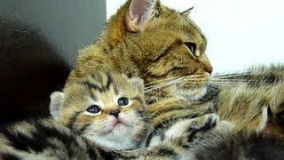 Cutest Cat Moments. Coco+Rio - Cutest Mom Cat and Kitten  ever.