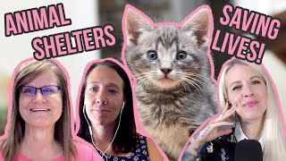 The Future of Cat Shelters! Where Are We Going, and How Do We Get There?