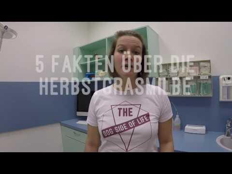 Wie die Schuppenflechte vom Hunger zu heilen