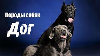 Породы собак. Дог