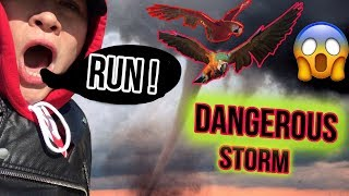 SHOCKING STORM TOOK AWAY OUR BIRDS! *VERY STRONG WINDS*