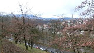スイス発 2017ベルンばら公園ソメイヨシノ桜3月22日【スイス情報.com】