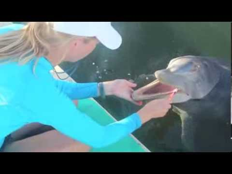 Dolphin Toothbrushing