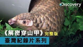 Discovery 臺灣紀錄片系列--《解密穿山甲》