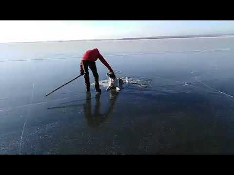 На озере в Забайкалье спасатели освободили собаку, попавшую в ледовую ловушку