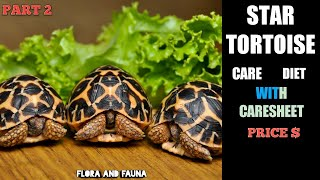 Indian star tortoise care in hindi | with caresheet | part 2 | sulcata care | Flora And Fauna
