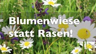 BLUMENWIESE statt Rasen -  Pflege und Tipps zur Anlage!