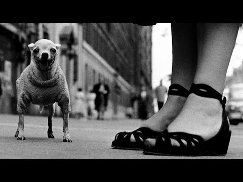 This Video Explains The Basics Of Low Angle Photo Composition