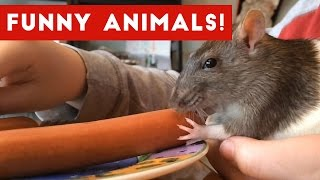 The Best Funny Pet & Animal Videos Of 2017 Weekly Compilation  Funny Pet Videos