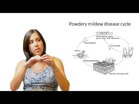 Video Introduction To Plant Diseases