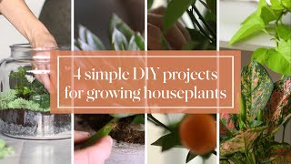 4 Simple DIY Projects for Growing Houseplants- Martha Stewart