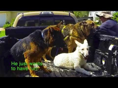 Southeast German Shepherd Rescue's Phoenix Dog Program