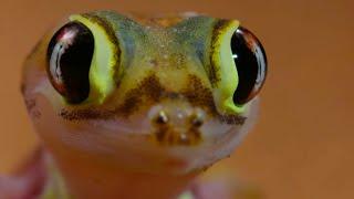 Antlion Cone Death Trap | The Hunt | BBC Earth