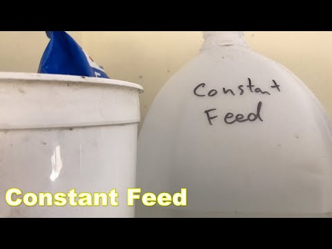 , title : 'Constant Feed