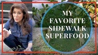 What is Purslane?  A Secret, Scrumptious Superfood!