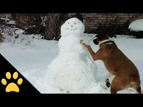 Feel Good Moment: Dogs Just Love the Snow!