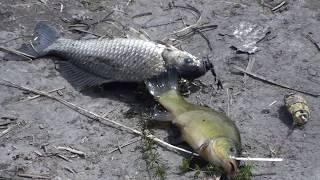 Рыбалка в волго - ахтубинской пойме