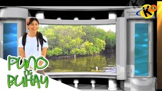 Grade 6 Science | Mangroves and Forest | Puno ng Buhay