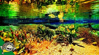 Natural Aquariums - Using Nature as much as possible. Live Stream