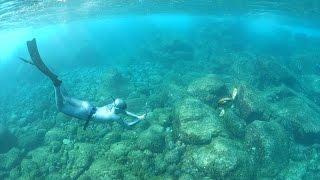 Aprenda a mergulhar e curta o fundo do mar!