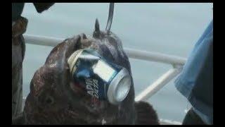 Dangerous catch      Опасный улов