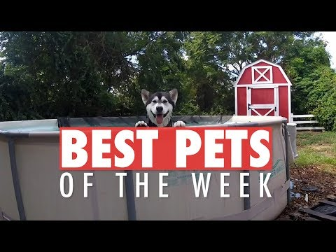 Best Pets of the Week | December 2017 Week 1