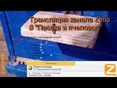 """Трансляция канала Zello """"Пасека и пчеловод"""". (Обзор за день) 18/04/2019"""