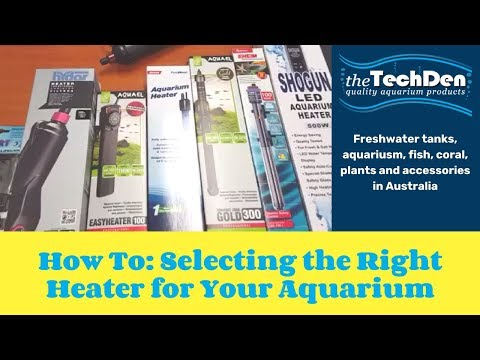 How To: Selecting the Right Heater for Your Aquarium (TechDen Guide)