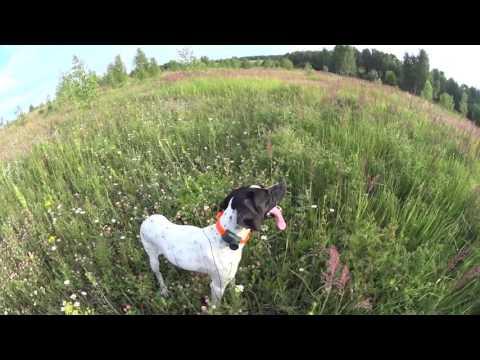 Прогулка с собакой.  Walk with a dog