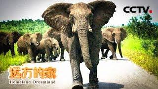 《远方的家》一带一路(402) 南非 野生动物的家园  20180725 | CCTV中文国际