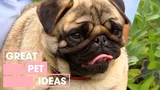 The Best Small Dog Breeds For First Time Owners | Pets | Great Home Ideas