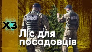 Співробітники СБУ незаконно отримали 22 га лісу під Києвом - ЗМІ