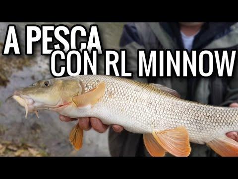 Bajkal video che pesca in pertica