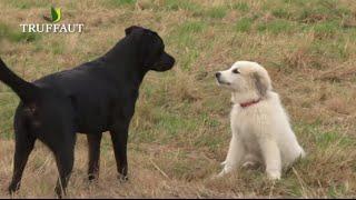 Comment choisir son chien ? - Jardinerie Truffaut TV