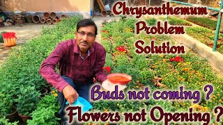 Two Big Problems And Their Solutions In Chrysanthemum