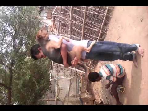 Desi Dance With Dog