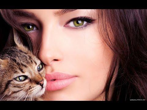 Всемирный День Кошек , Поздравления в День Кота