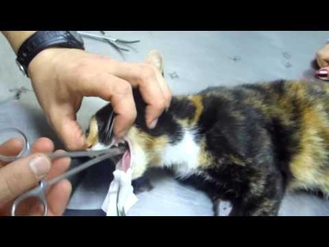 Обследование на паразитов в перми