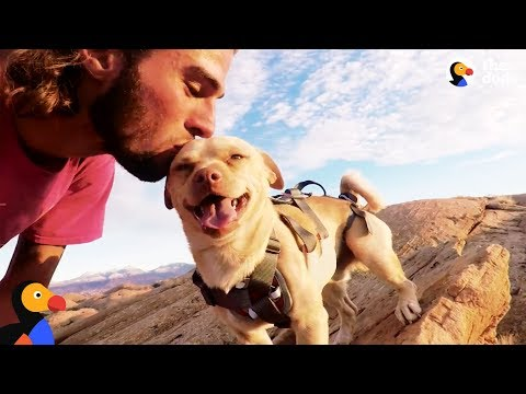 Fearless Rescue Dog Jumps Off Cliffs With His Dad | The Dodo