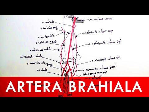 Tratamentul eficient al artrozei deformante a articulațiilor
